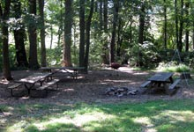 Best Camping In Maryland Pet Friendly Maple Tree